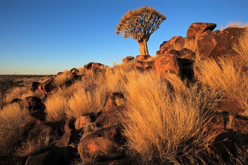 Kołczanu drzewa krajobraz fotografia royalty free
