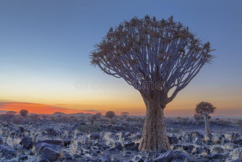 Kołczanu drzewo przy dzień przerwą obraz stock