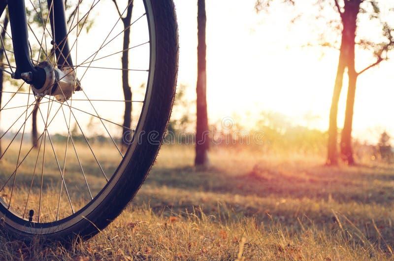 Koło bicykl zaświeca położenia słońcem przeciw tłu jesieni jesieni lasowy spacer na bicyklu zdjęcie stock