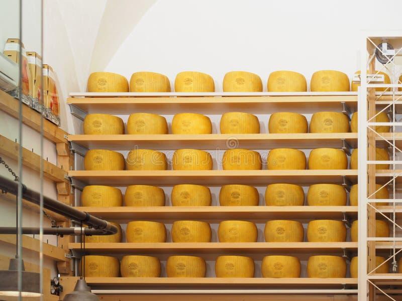 Koło Parmezański ser zdjęcia stock