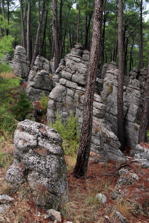 Kołysa nd las obrazy royalty free