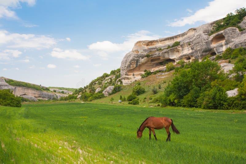koń śródpolne zielone góry obrazy stock