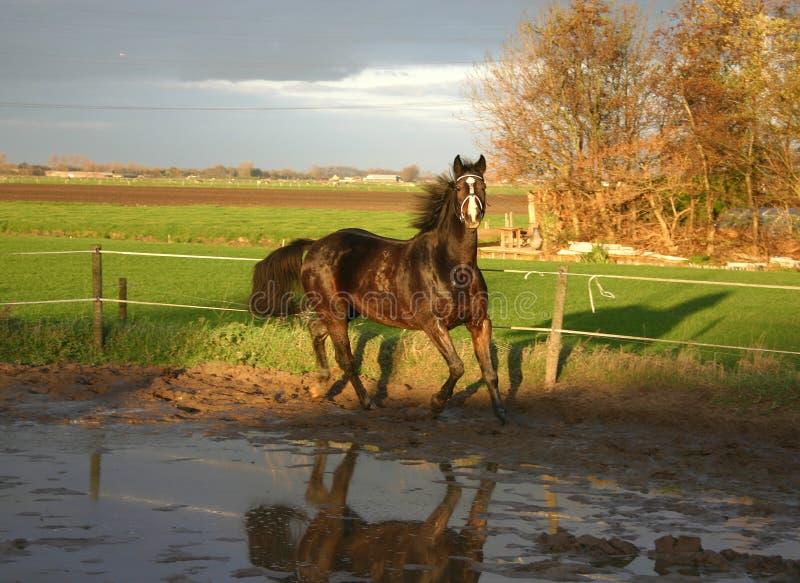 koń zdjęcie stock