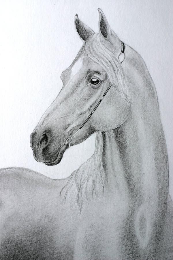koń arabskiej ołówek royalty ilustracja