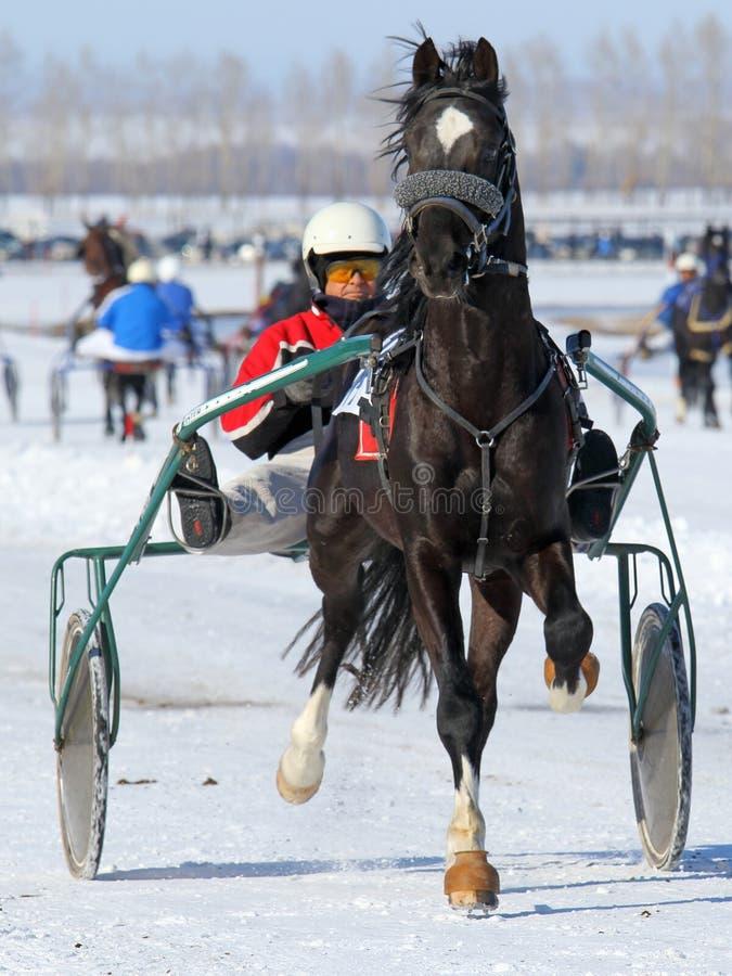 Koń biega na śniegu obrazy royalty free