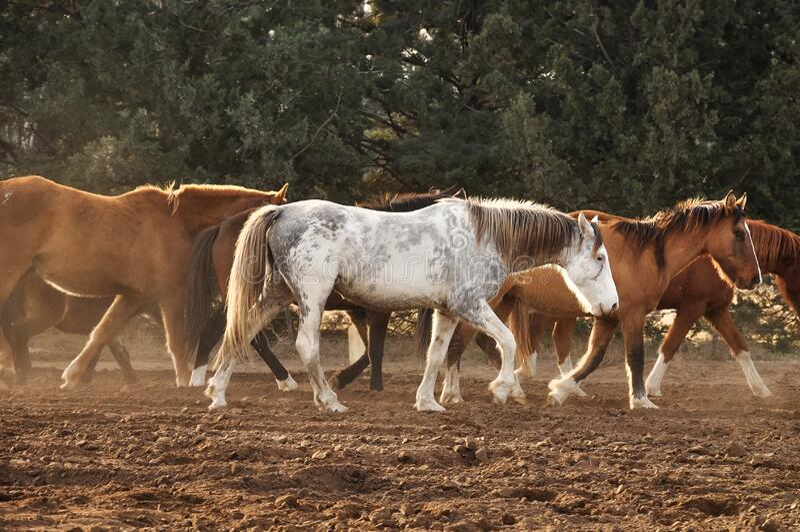 koń chodzący zdjęcie royalty free