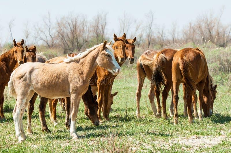 koń, equine, nag, hossa, kilof, dobbin obrazy stock