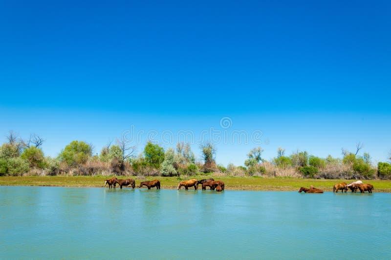 koń, equine, nag, hossa, kilof, dobbin zdjęcia stock