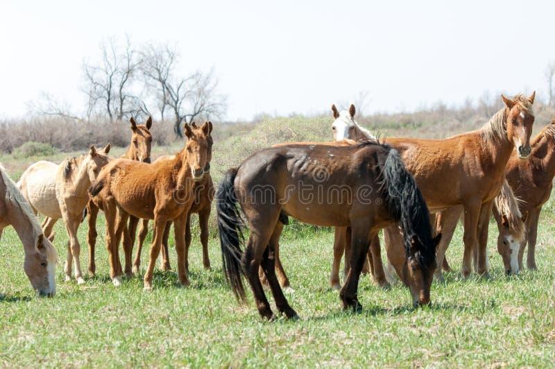 koń, equine, nag, hossa, kilof, dobbin fotografia royalty free