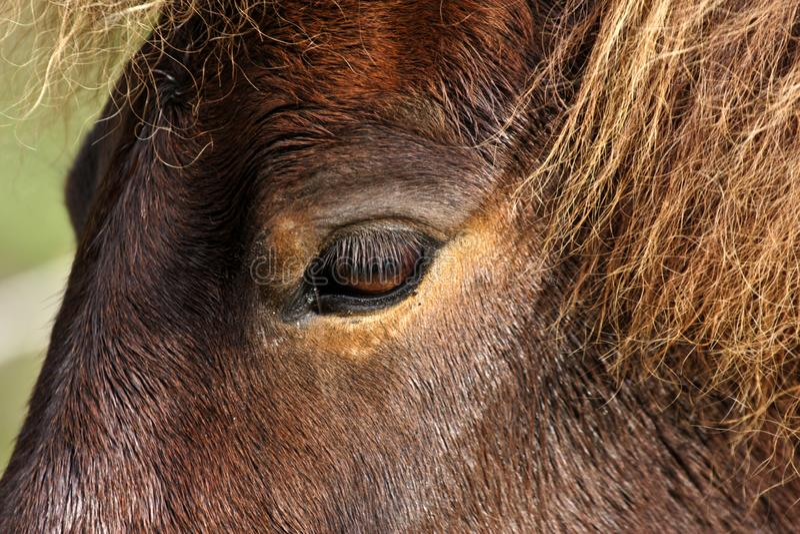 Koń głowy zbliżenie fotografia stock