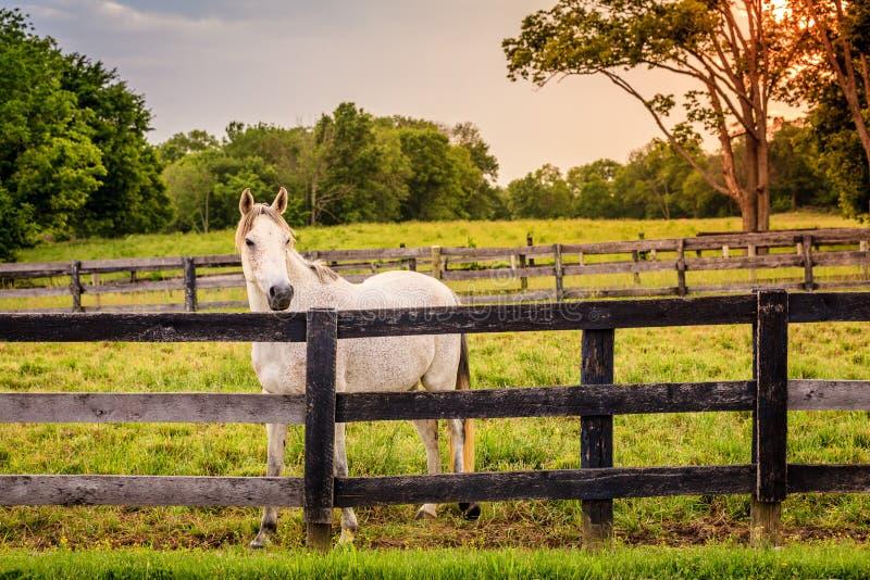 Koń gospodarstwo rolne obraz stock
