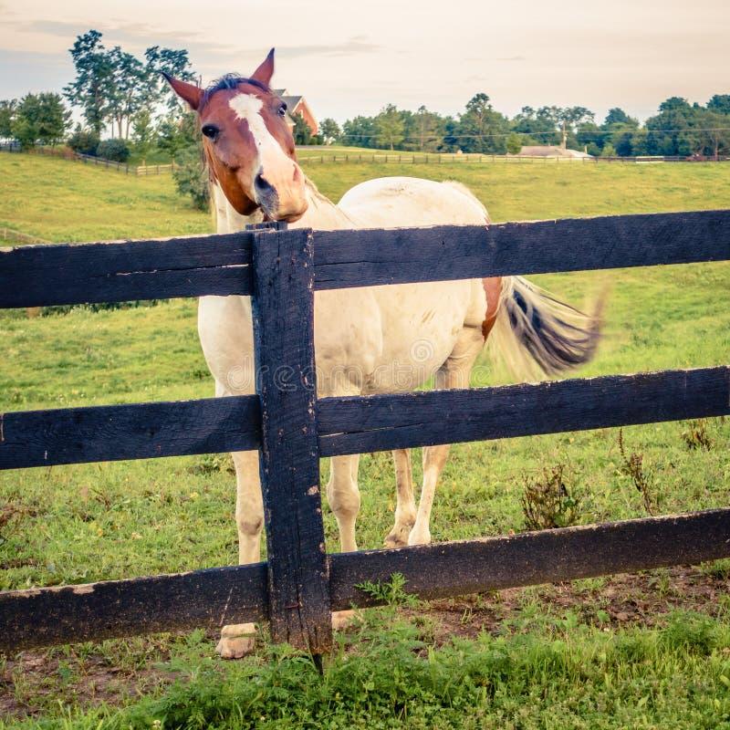 Koń gospodarstwo rolne zdjęcia stock