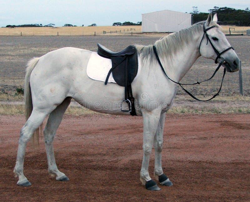 koń halsujący zwierzę. zdjęcia stock