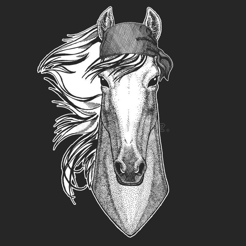 Koń, hossa, rycerz, rumak, courser Chłodno pirat, żeglarz, seawolf, żeglarz, rowerzysty zwierzę dla tatuażu, koszulka, emblemat royalty ilustracja