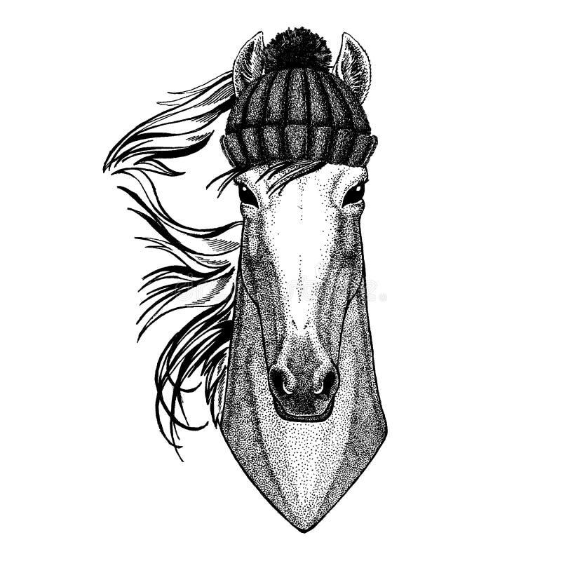 Koń, hossa, rycerz, rumak, courser Chłodno zwierzę jest ubranym trykotowego zima kapelusz Ciepła pióropuszu beanie bożych narodze royalty ilustracja