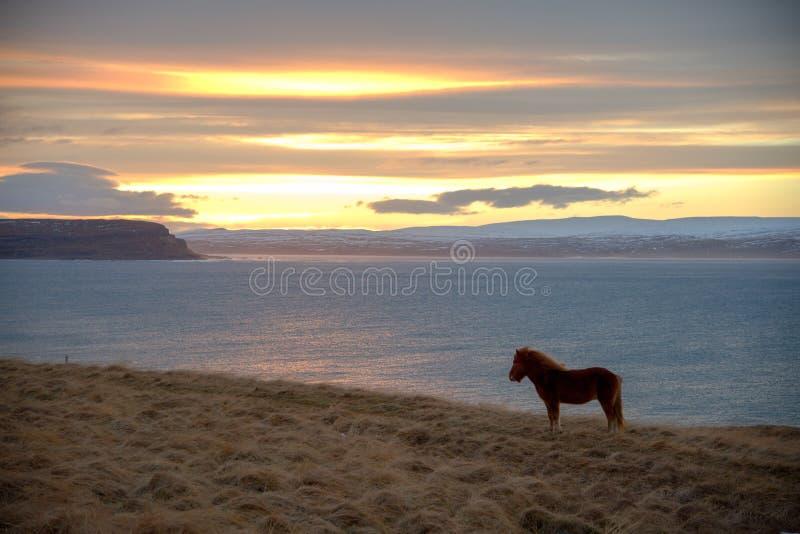 Koń i jezioro zdjęcie royalty free