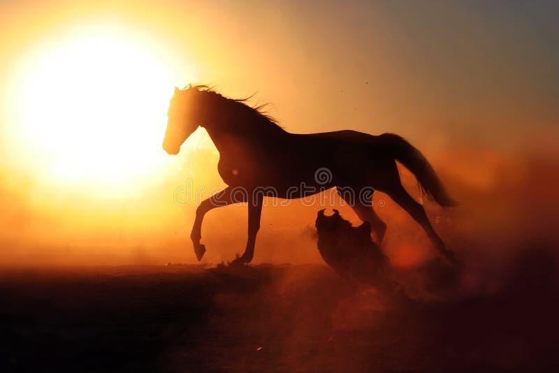 Koń i pies na zmierzchu tle fotografia stock
