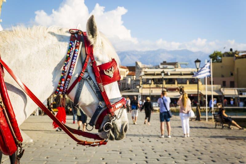 Koń korzystający ze słońca w porcie weneckim, Chania, Krecie, Grekach, Grecji, Europie fotografia royalty free