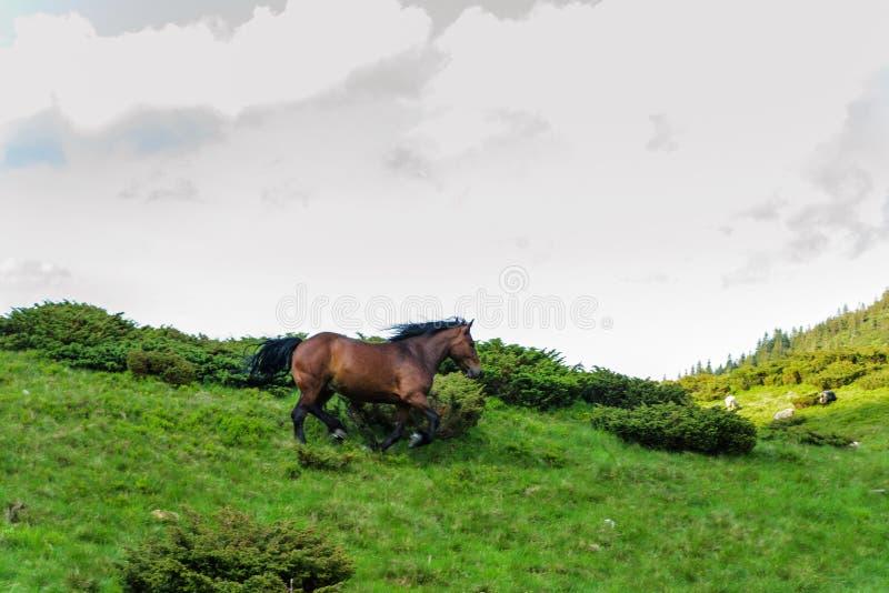 Koń który biega w tle niebo i chmurnieje obraz stock