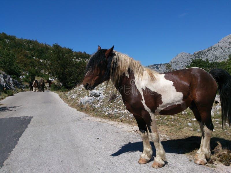 Koń na drodze obrazy stock