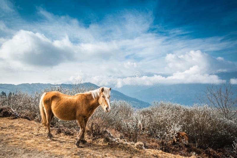 Koń na górze zdjęcia stock