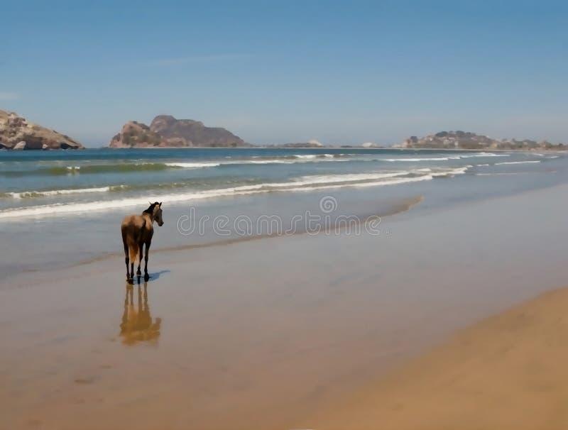 Koń na plaży Mazatlan ilustracji