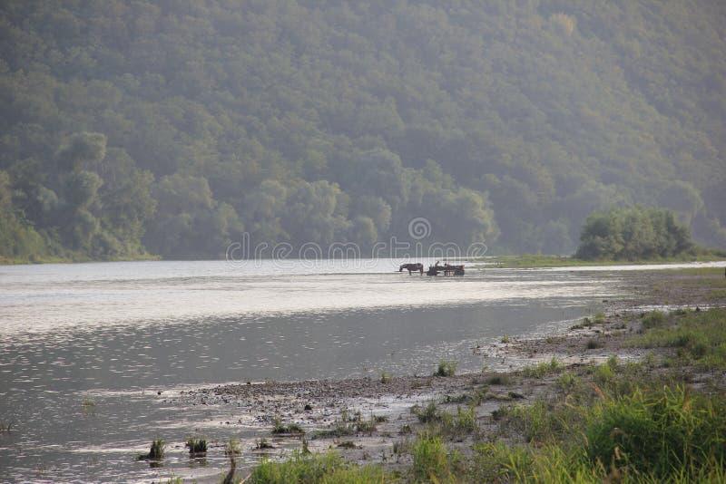 Koń na podlewanie puszce w górach fotografia royalty free