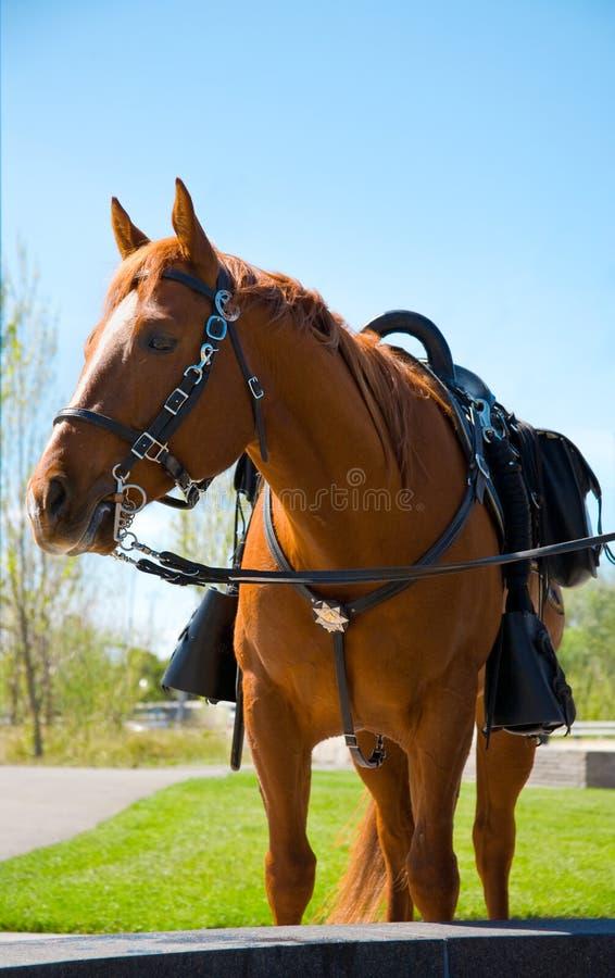 koń na policję zdjęcie royalty free