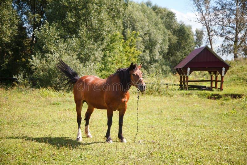 Koń na polu zdjęcie royalty free
