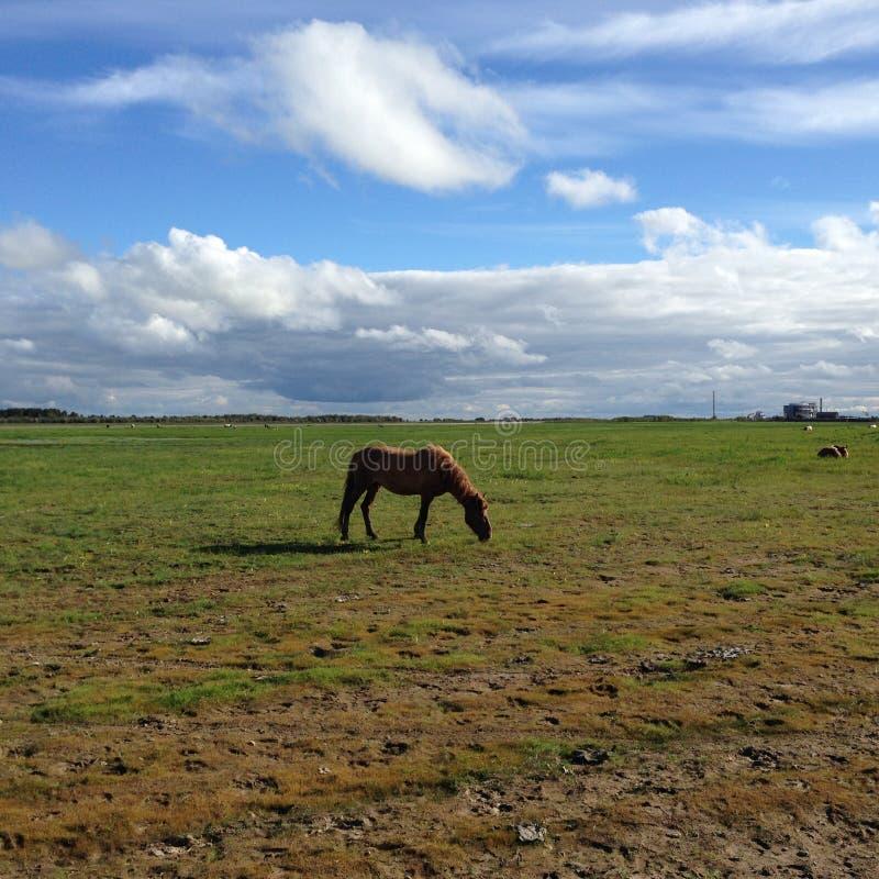 Koń na polu zdjęcie stock