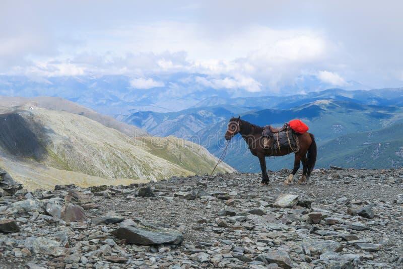 Ko? na prze??cza Karaturek scenicznym widoku Altai g?ry, Rosja obraz stock