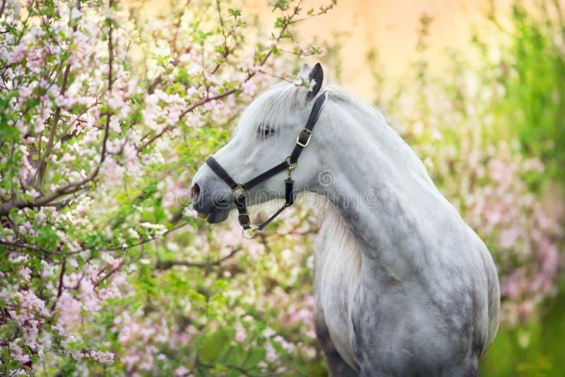 Koń na wiosna kwiatach fotografia stock