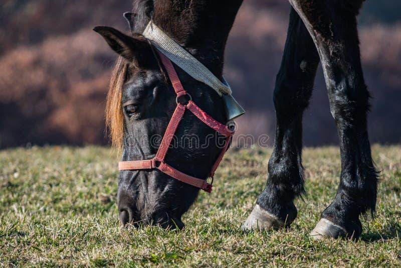Koń na wzgórzu blisko Brasov, Rumunia zdjęcia royalty free