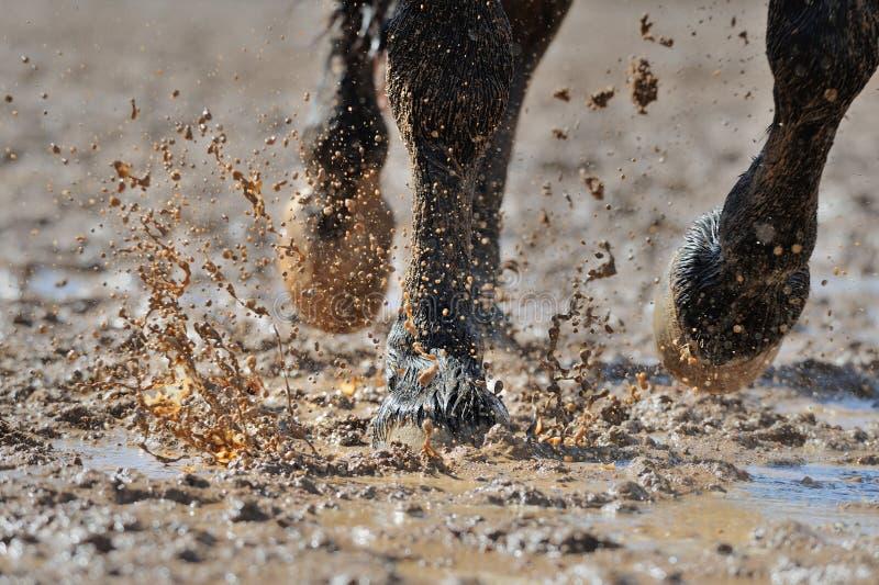Koń nogi w brudnej wodzie zdjęcie stock