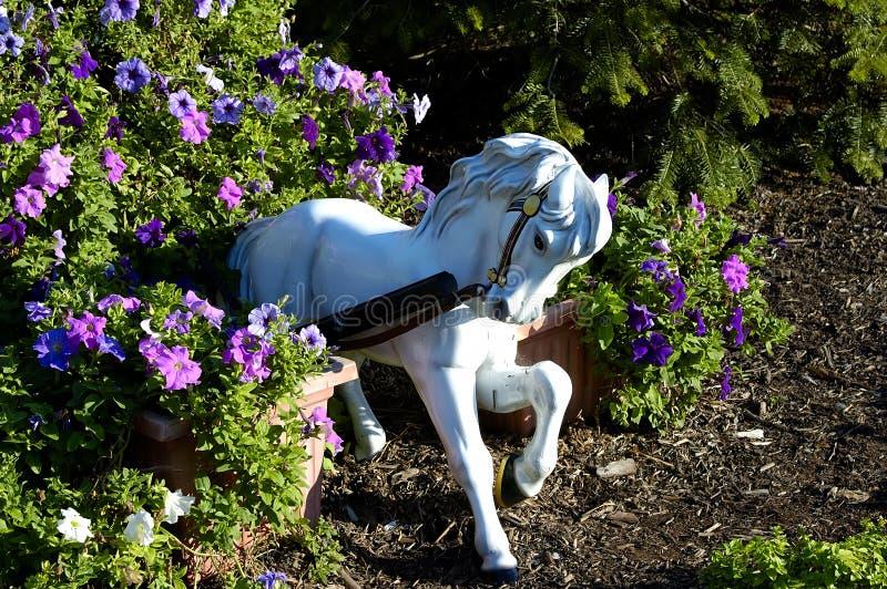 koń ogrodu obraz royalty free
