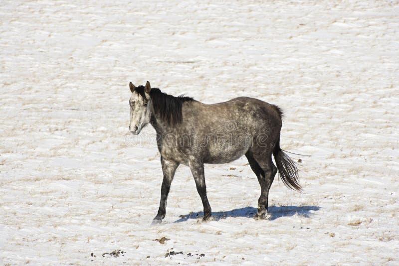 koń pastwiska śnieg zdjęcie stock