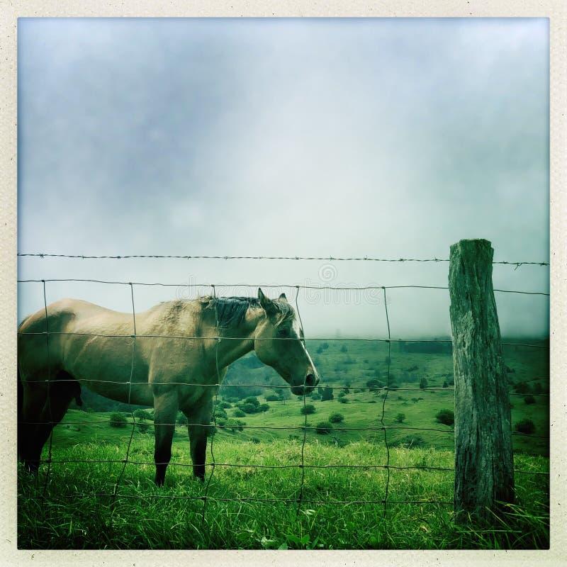 koń pastwiskowy pola zdjęcia royalty free