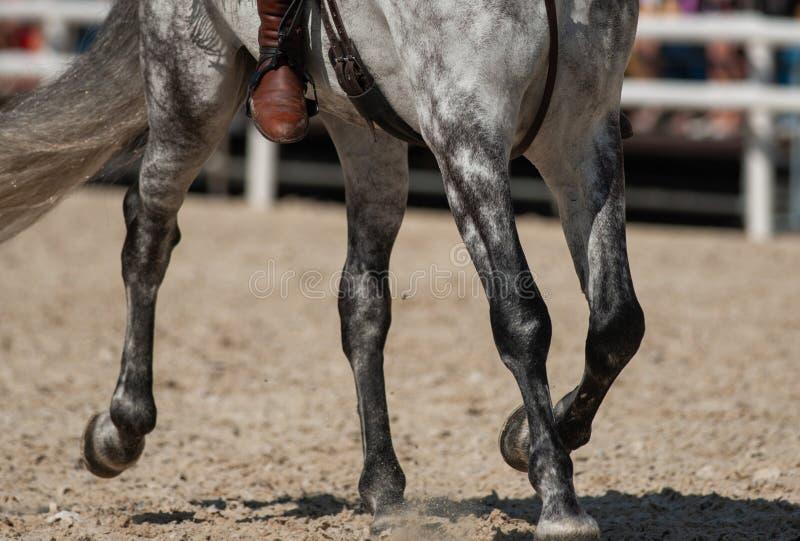 Koń pod jeźdza zbliżeniem obraz royalty free