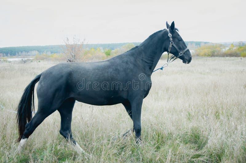 koń pola obraz royalty free