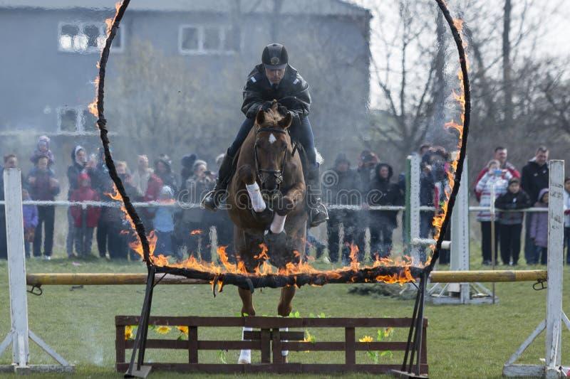 Koń policja podpala bariery doskakiwanie obraz stock