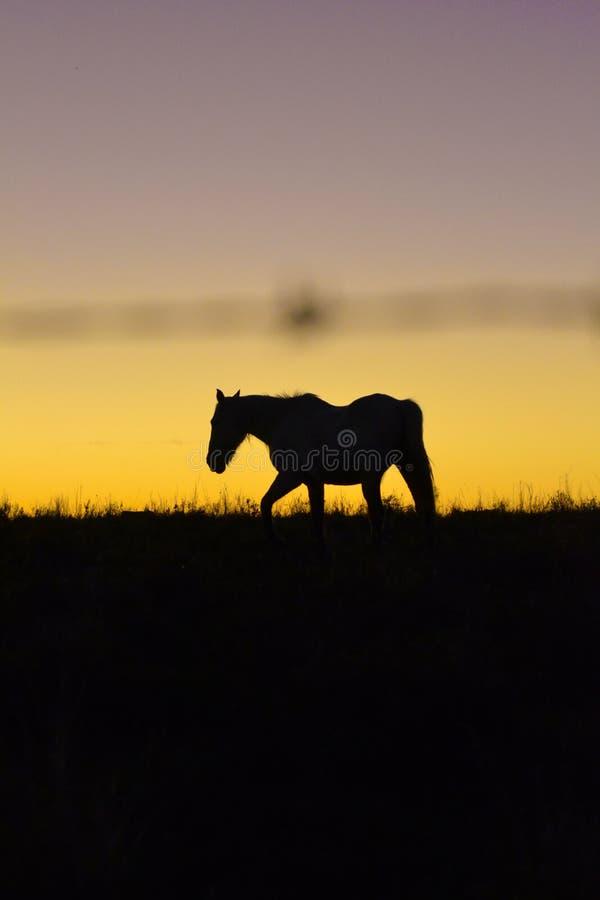 Koń przy półmrokiem w polu zdjęcie stock
