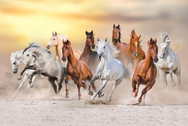 Koń pustyni bieg obrazy stock