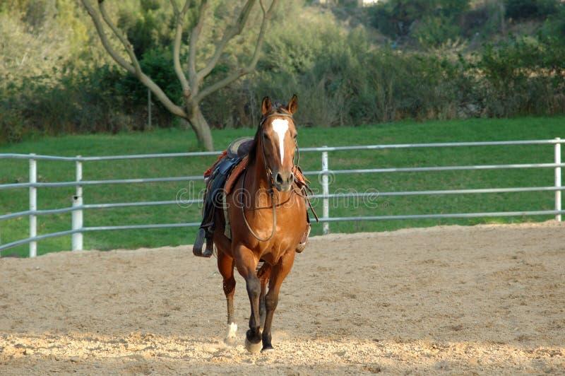 koń siodłający obrazy stock