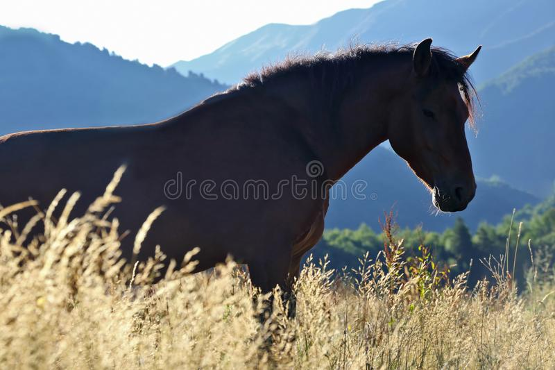 Koń stoi w trawie na tle góry obrazy stock