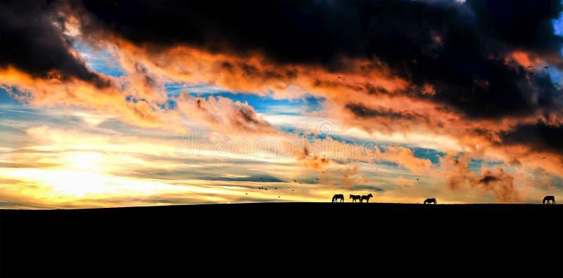 Koń sylwetek zmierzch zdjęcie royalty free