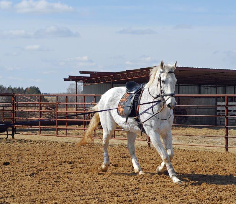 koń szkolenia zdjęcie royalty free