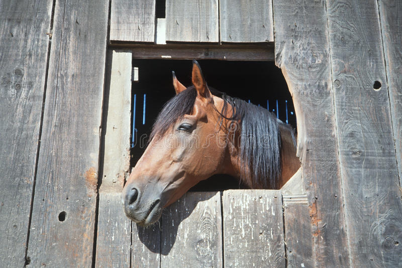 Koń target130_0_ z stajni okno obraz stock