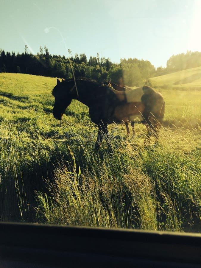 koń uroczy zdjęcie royalty free