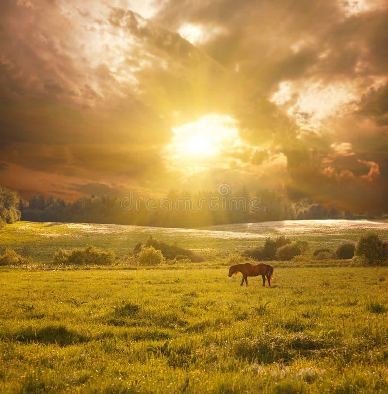 Koń w świetle słonecznym fotografia stock