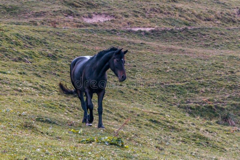 Koń w górach obrazy stock